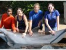 SeaVet students with dolphin