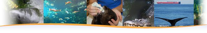 aray of animal care