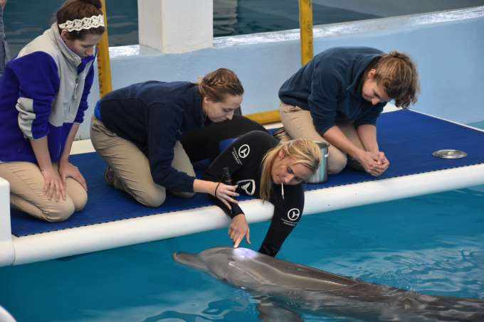 Students at clearwater marine aquarium learning about trained behaviors for physical exams. Student is looking into blowhole to understand what health airway looks like.