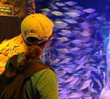seavet trip to sealife