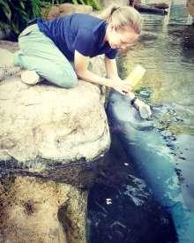 Dr. Martony feeding mananee calf