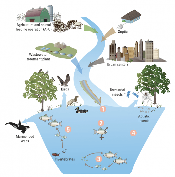 Nielson et al. 2018 (Figure 1). Representation of some of the inputs of contaminants to the aquatic environment.