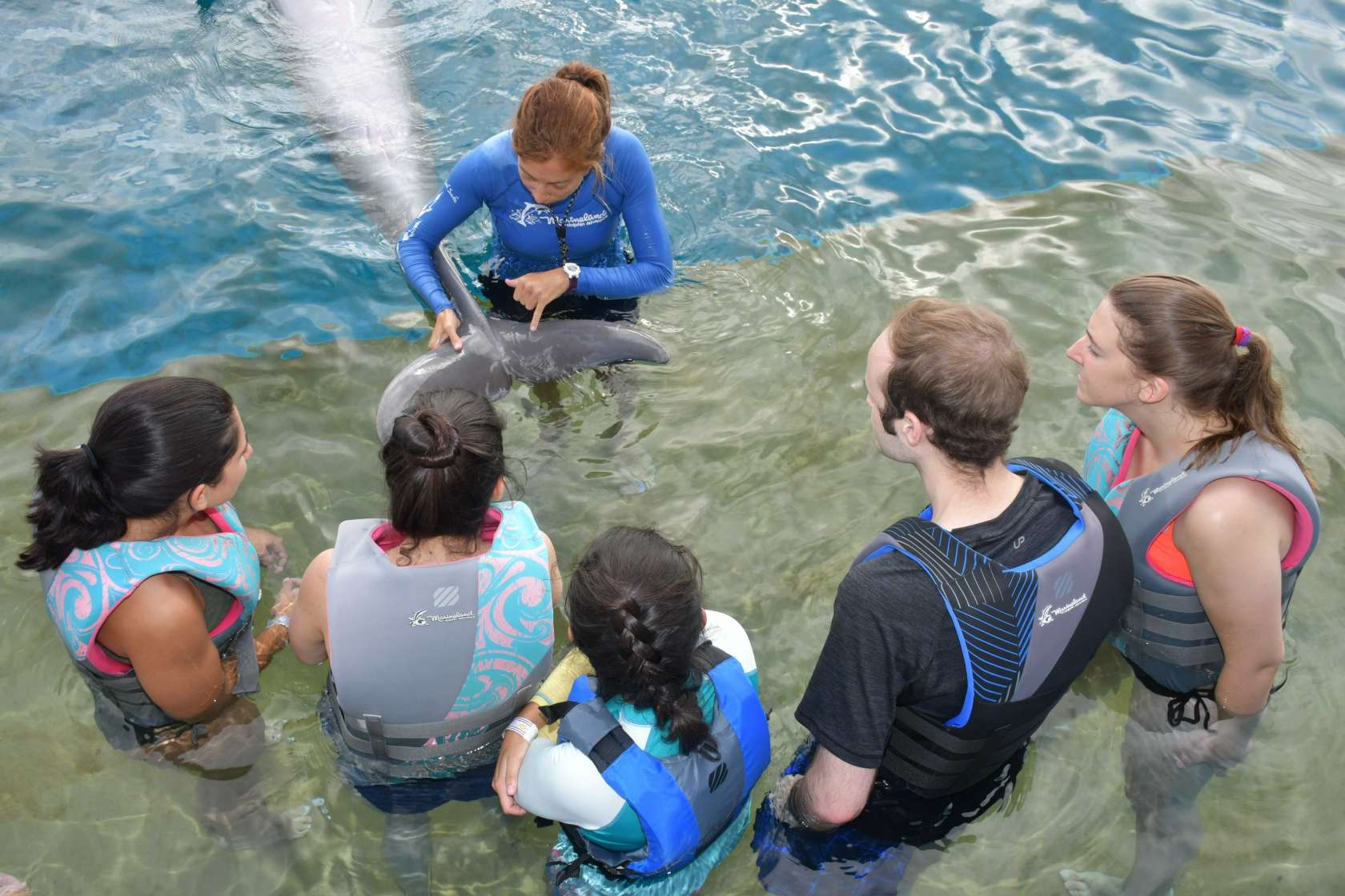 seavet dolphin learning