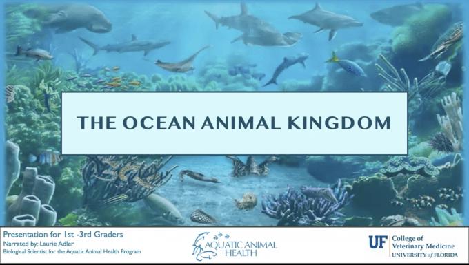 Ocean animal kingdom 1-3