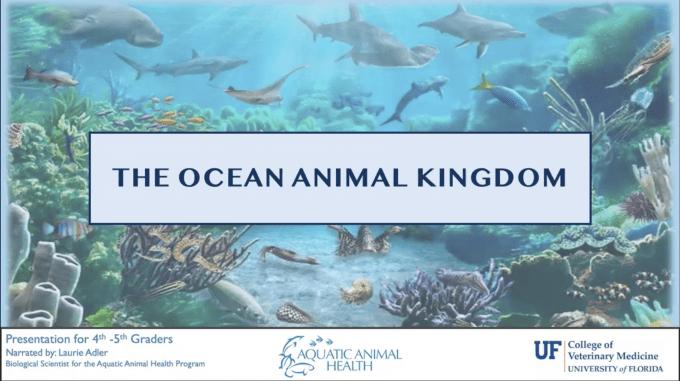 Ocean Animal Kingdom 4-5th